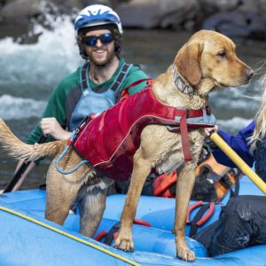 Hundeschwimm-und Rettungsweste