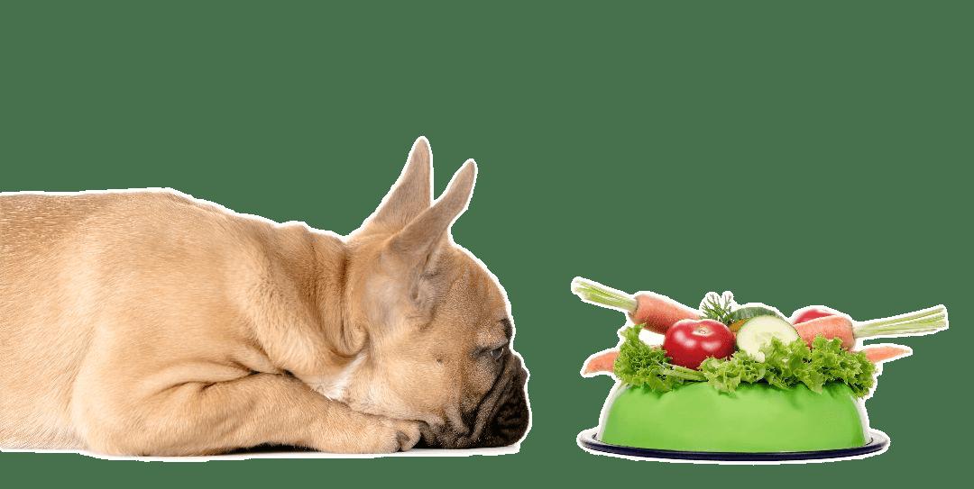 Frenchie mit Hundenapf