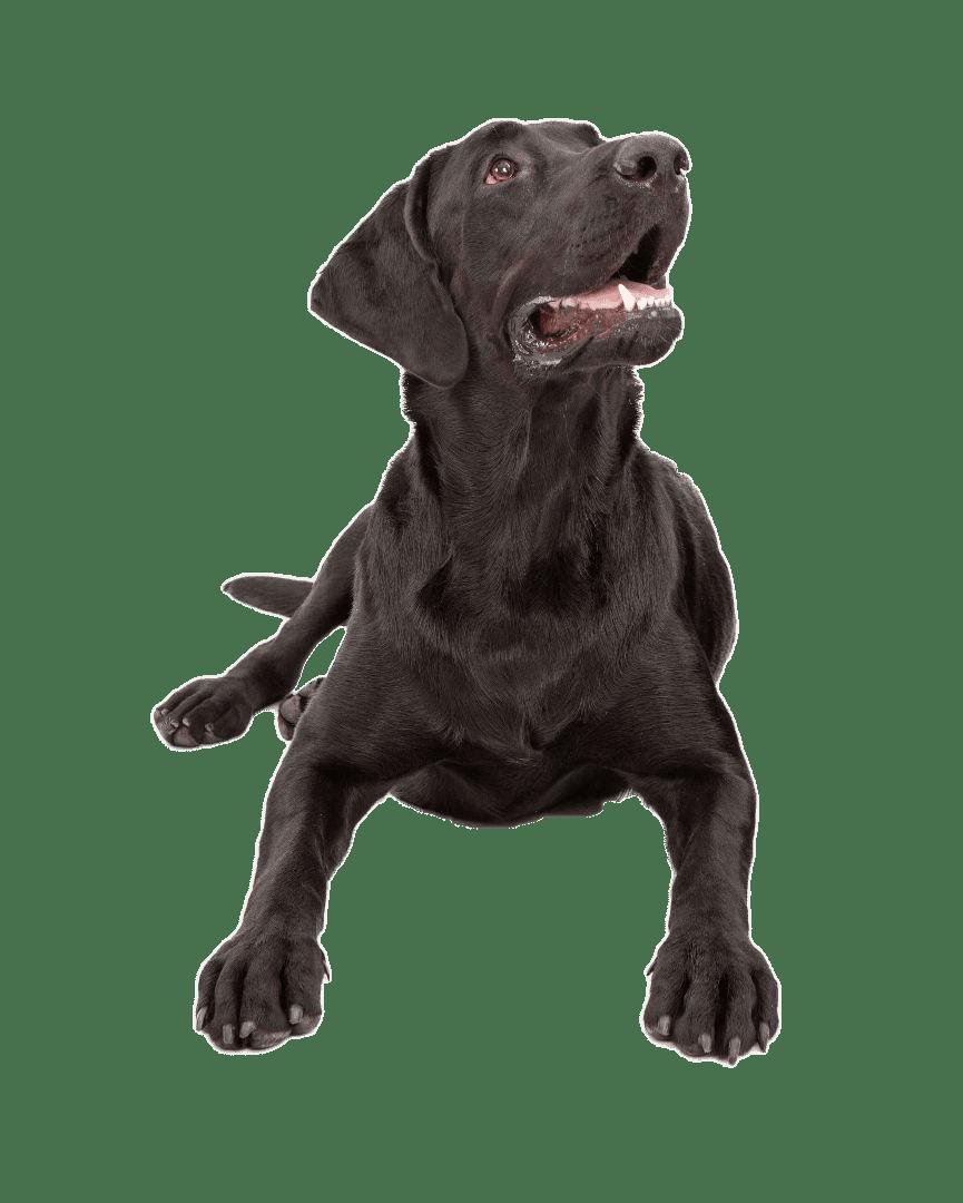 Hund für Startseite
