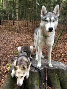 Hundefutter mit Insektenprotein