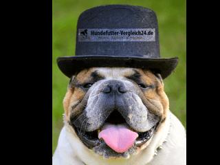 dicker Hund durch Hundefutter