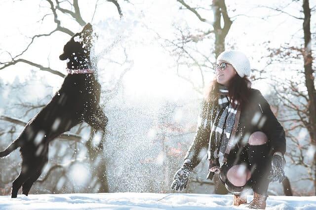 Hund hat einen Riesenspaß im Schnee