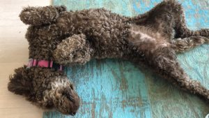 Medihoney für Hunde