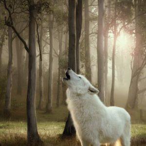 Futtervergleich Wolf of Wilderness