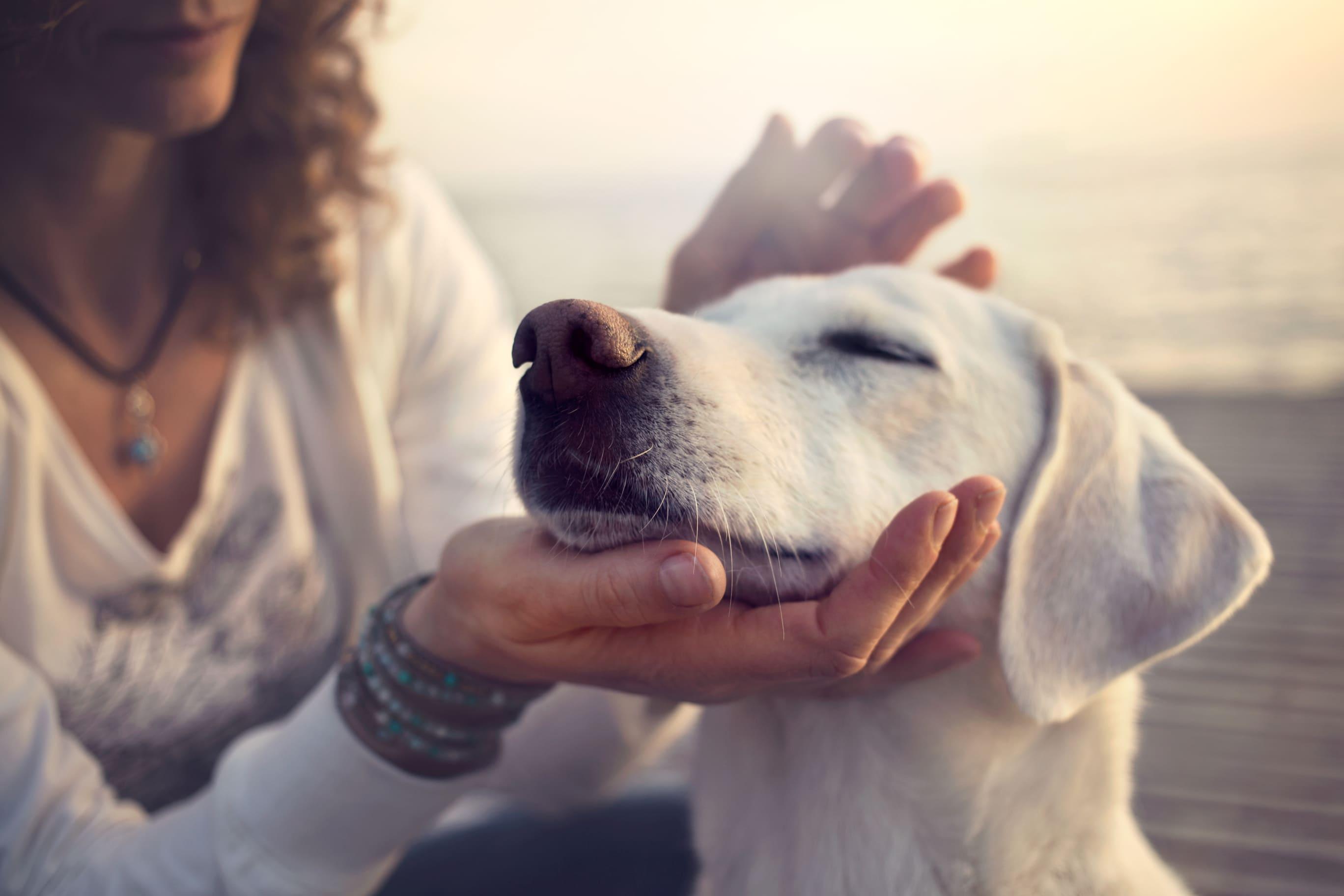 Wurmkur beim Hund notwendig?