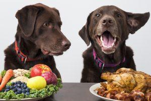 Zwei Hunde, Labrador mit einer Auswahl an unterschiedlichem Futter