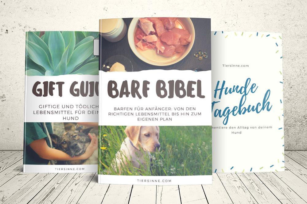 Barf Buch für Anfänger, Ernährungsplan