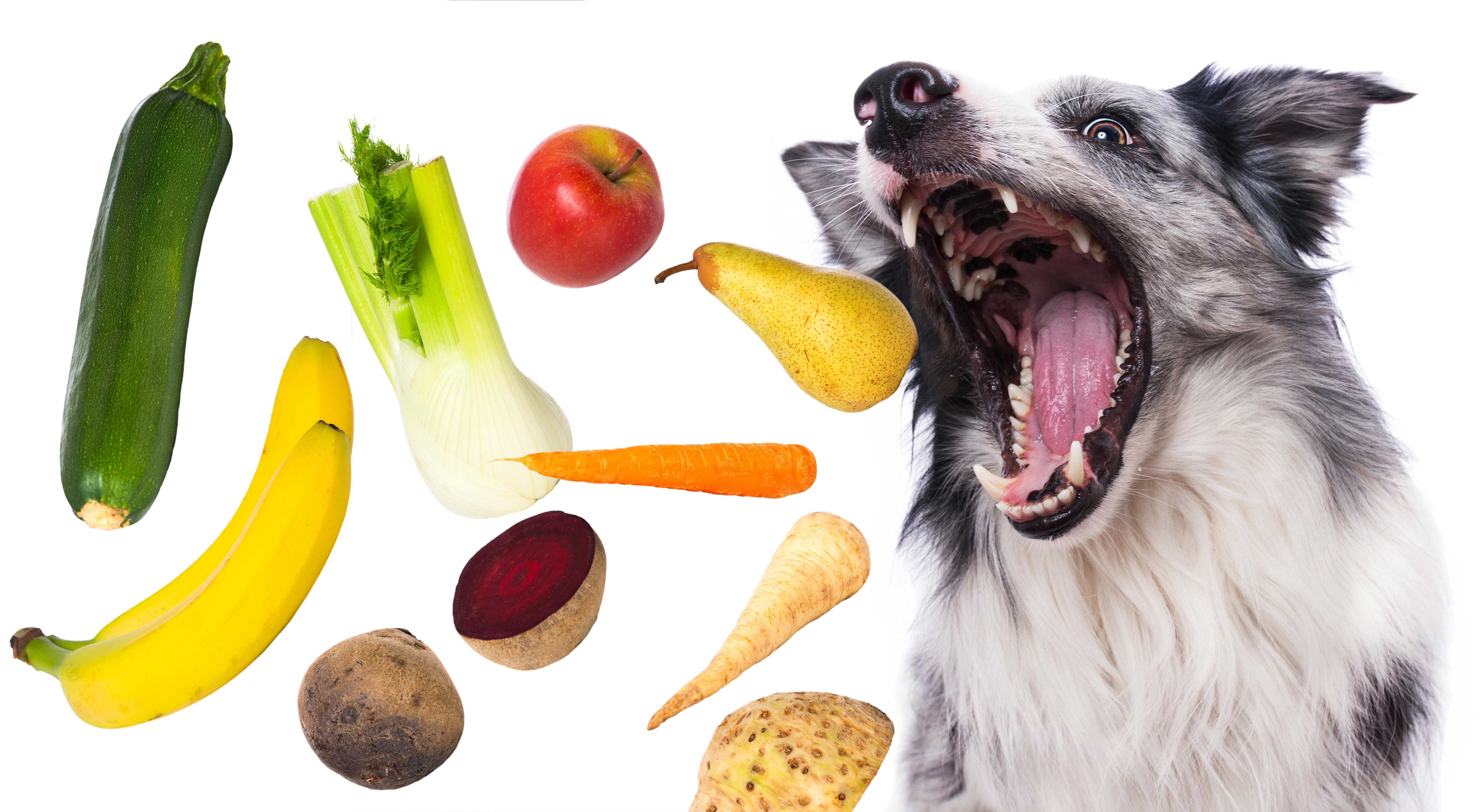 Obst und Gemüse für Hunde Bio-Nassfutter