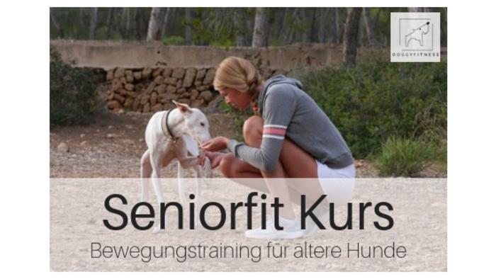 Bewegungstraining für Hunde