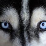 Hundesprache Schwanzwedeln