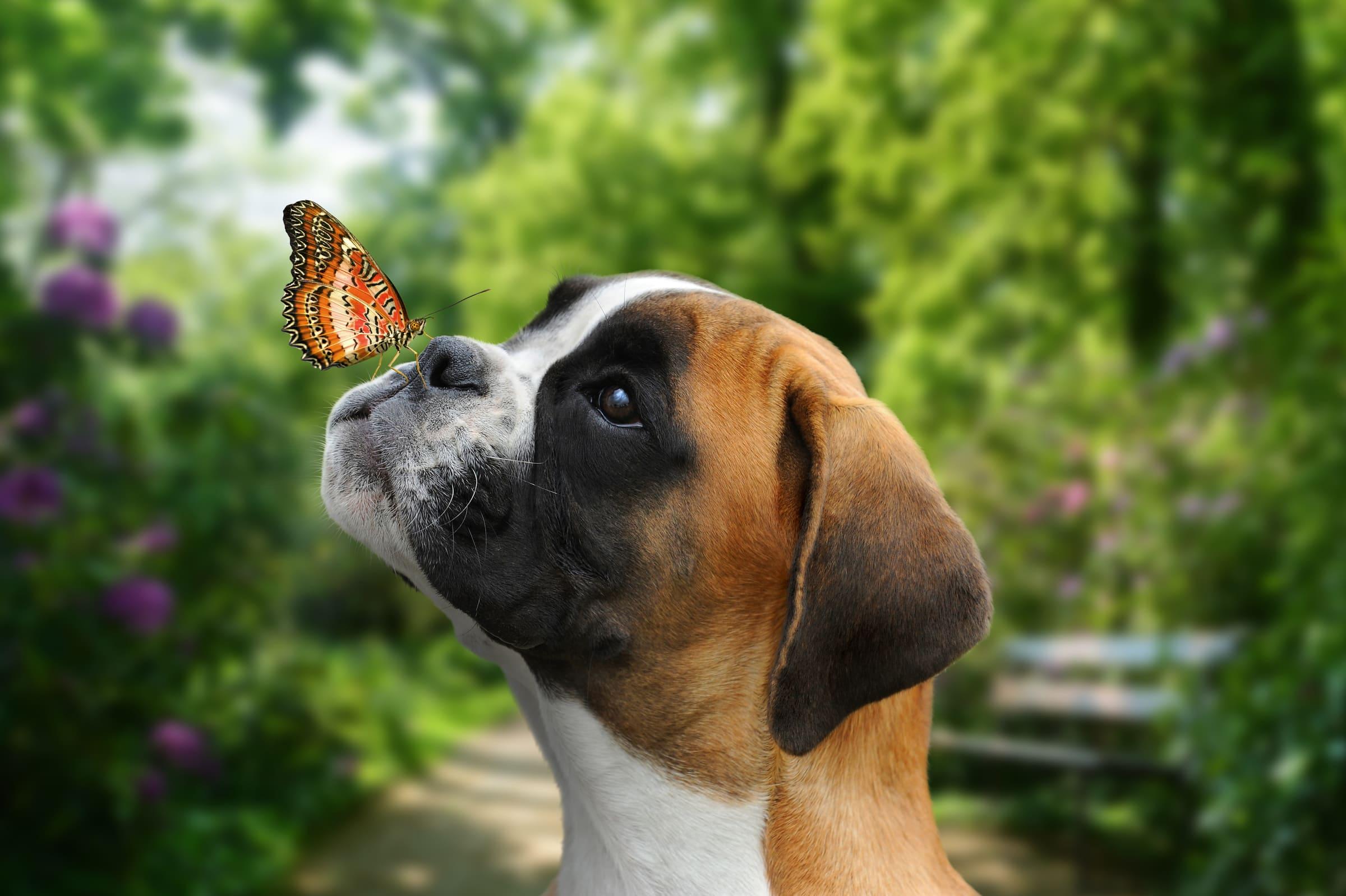 7 Gerüchte der Hundeernährung