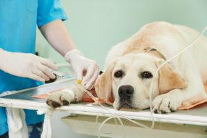 Hundekrankenversichung, notwendig
