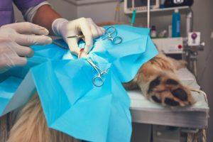 Hundekrankenversicherung bei Unfall