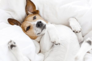 Nierenerkrankung beim Hund