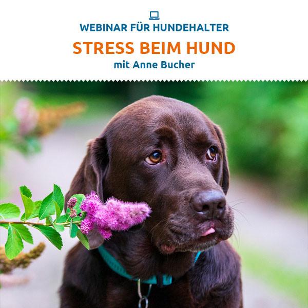 Webinar Stress beim Hund
