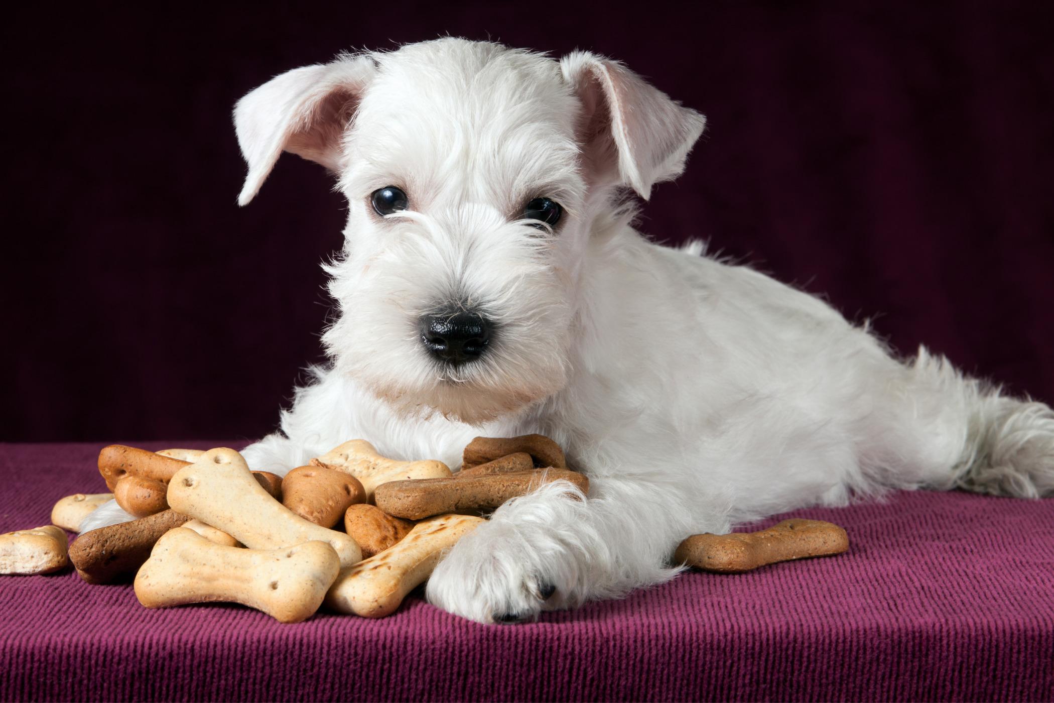 Getreidefreie Hundekekse