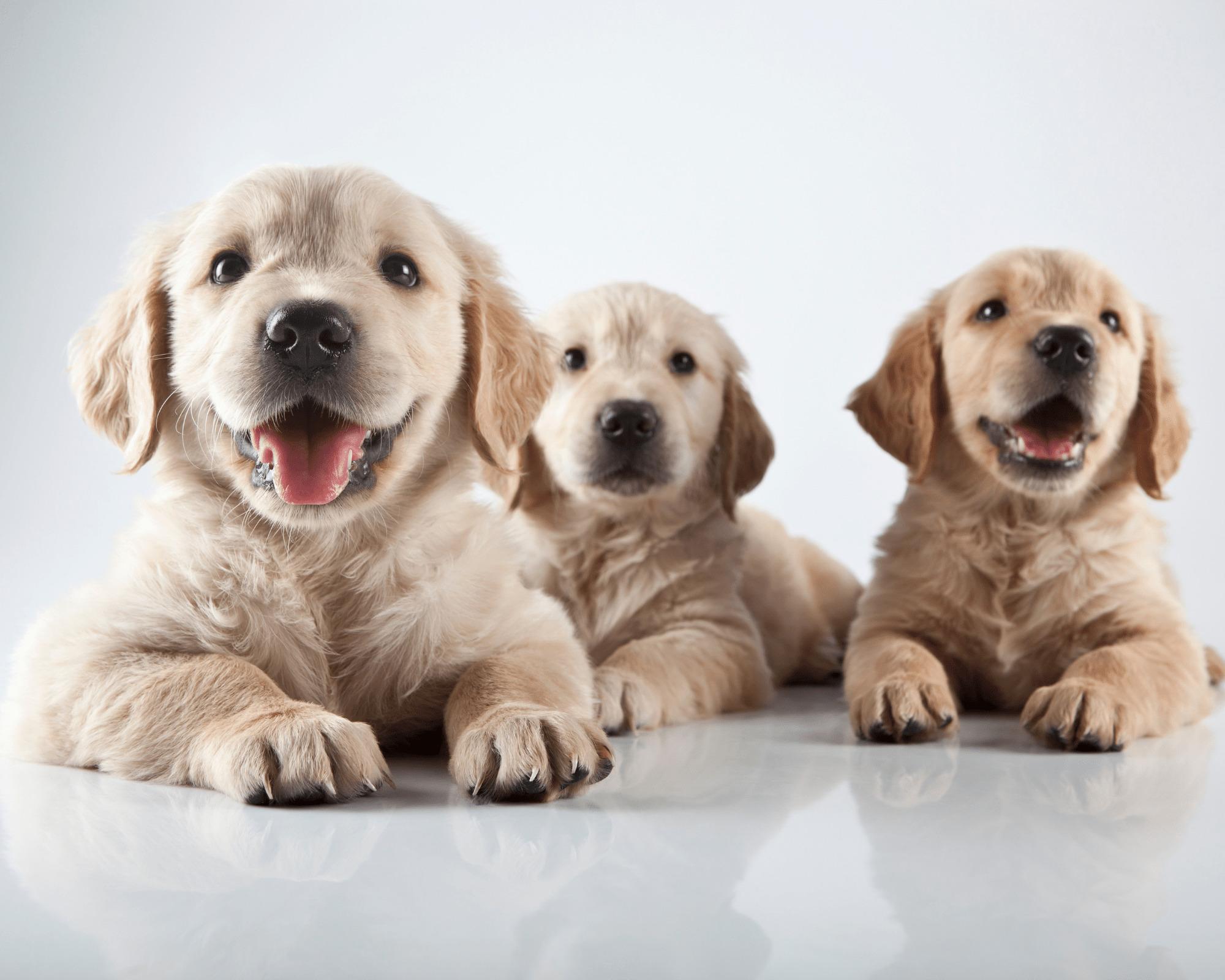 Hundefutter getreidefrei für ein gesundes Hundeleben