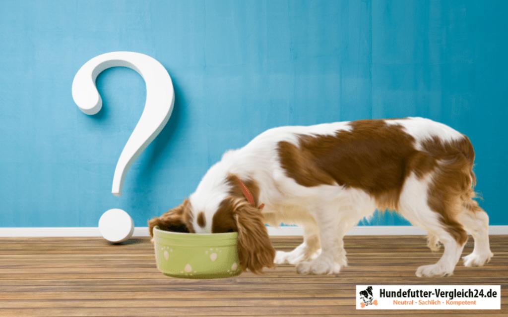 FAQ Hunde Nassfutter