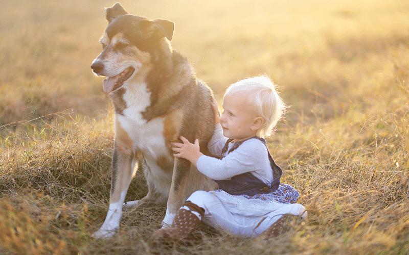 Trockenfutter für alte Hunde