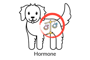 Hormone Nahrungsergänzungsmittel