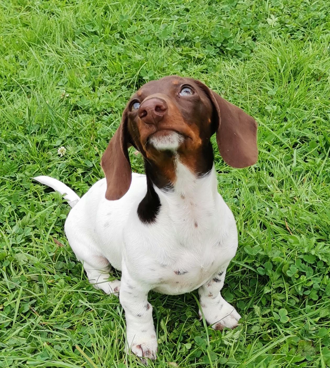 Nassfutter für kleine Hunde