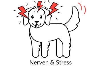 Nerven & Stress Nahrungsergänzungsmittel