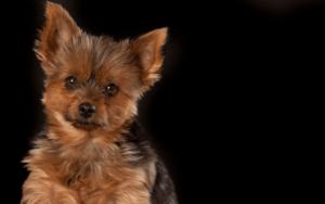 Trockenfutter für kleine Hunde